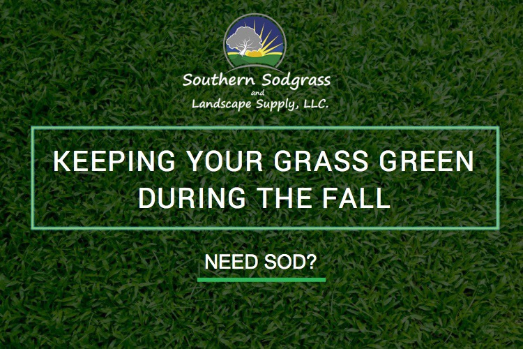 Keeping Your Grass Green During the Fall Southern Sodgrass